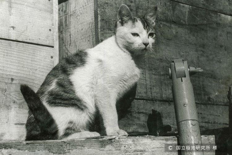 タロ・ジロだけじゃない 南極に渡った猫の話 - 東京都 - イナバナ.コム